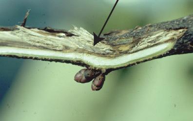 Open Egg nests