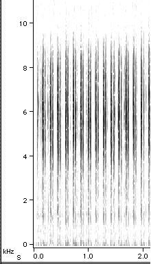 M. cassini Courtship III song